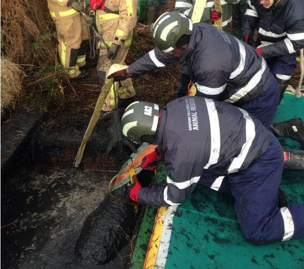 Fire crews attempt to rescue Chester
