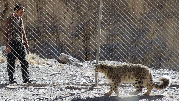 [Image: _79587531_leopard_keepr.jpg]