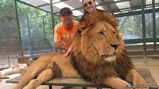 Lujan Zoo lion