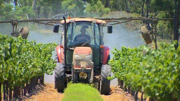 Tractor spraying vines