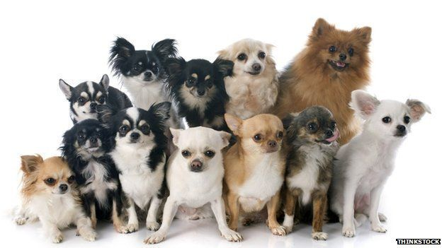 Dog Map Find The Top Pooch In Your Postcode BBC News - Dog ownership us map