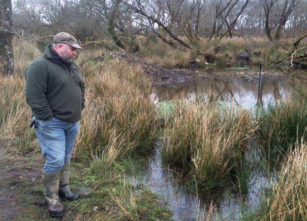 Derek Gow looking at a beaver lodge