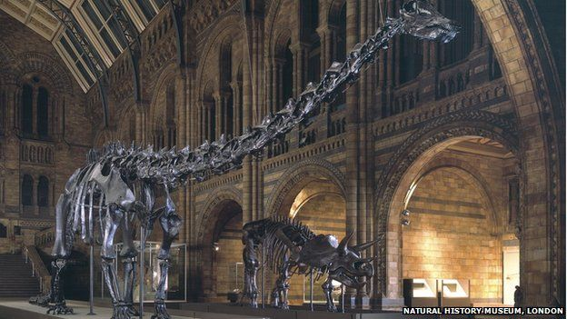 Dippy in the Natural History Museum