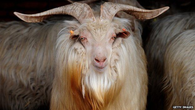 The goat is passive in Chinese astrology
