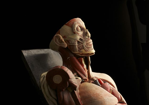 Old anatomy model - by Anthony Edwards