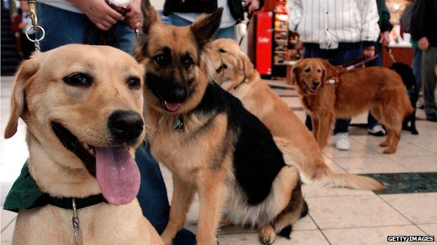 Dogs queuing