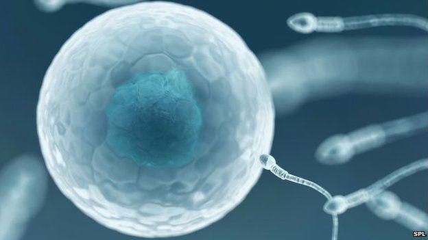 Egg and sperm, computer artwork.