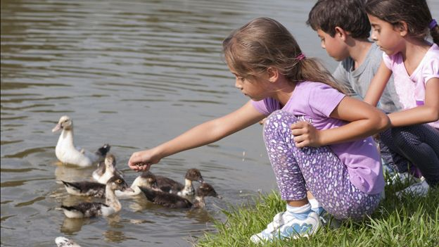 Kids feeding ducks at the waterside