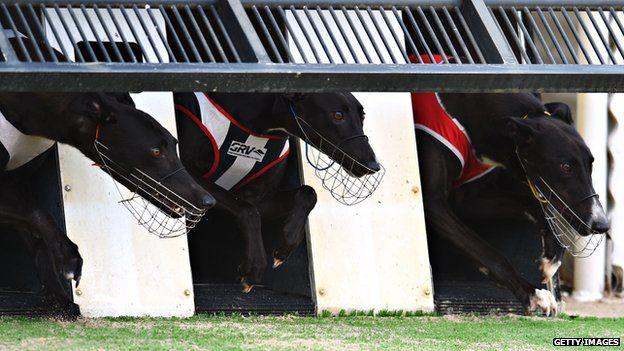 Greyhound racing in Melbourne, Australia (18 Feb 2015)