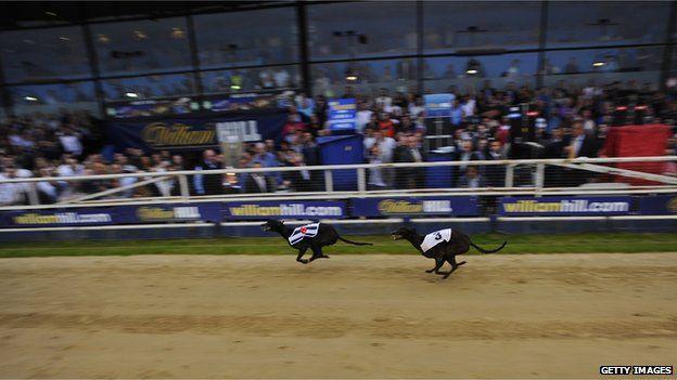 Greyhound race in Wimbledon, England (May 2014)