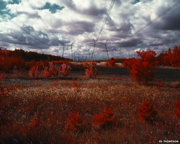 The Red Forest: The Exclusion Zone, 2012