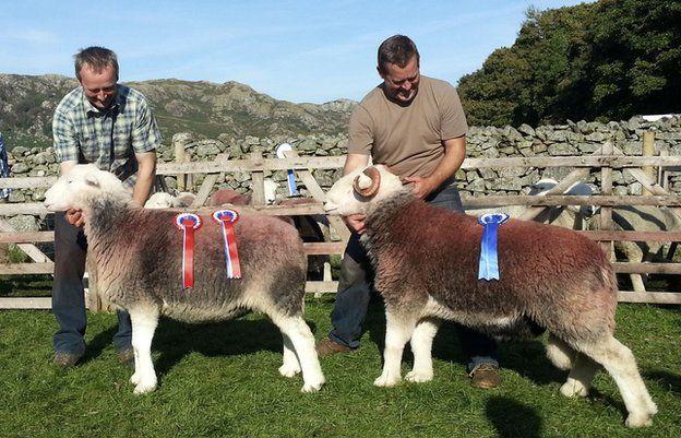 Two farmers presenting prize-winning sheep
