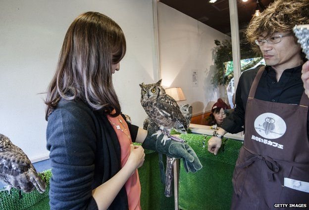 An owl sits on a woman's arm at Tori-no Iru Cafe in Tokyo