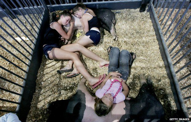 Dani Lettice (Top-R), Kat Richards (L), and Katie Simon (bottom) from the Pauma Valley 4-H Club, take a snooze on their hogs before competing in a hog contest at the San Diego County Fair June 29, 2005 in Del Mar, California.