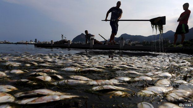 Dead fish are pictured next to a rowing athlete, as his coach helps him to clean up his paddle,