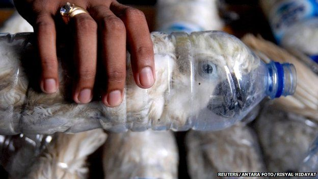 A policeman holds a water bottle with a yellow-crested cockatoo put inside for illegal trade, at the customs office of Tanjung Perak port in Surabaya, East Java province, Indonesia, May 4, 2015