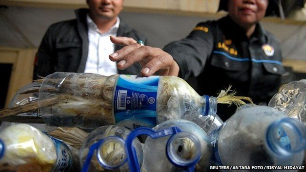 A police officer holds a water bottle which with a yellow-crested cockatoo put inside for illegal trade at the customs office of Tanjung Perak port in Surabaya, East Java province, Indonesia, May 4, 2015