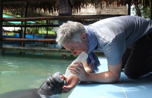 BBC producer John Murphy feeds a rescued manatee