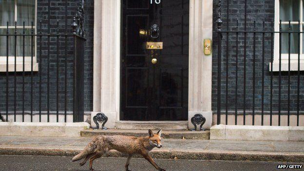 Fox at Downing Street