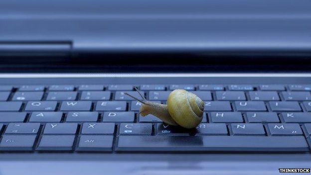 Snail on computer