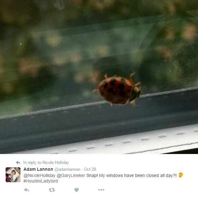 Adam Lannon on Twitter: (at) Nicole Holliday (at) Gary Lineker, Snap! My windows have been closed all day?! (Hash) Houdini Ladybird. Picture: Ladybird on a window