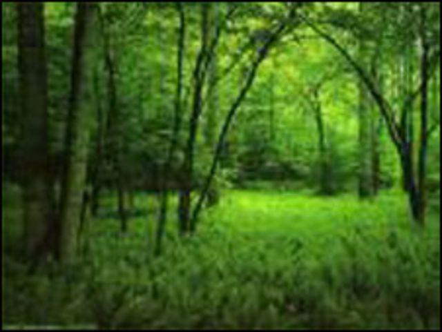 Bosque Atlántico de Brasil (Foto ONU)