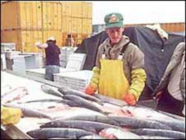 Xưởng chế biến cá ở Alaska