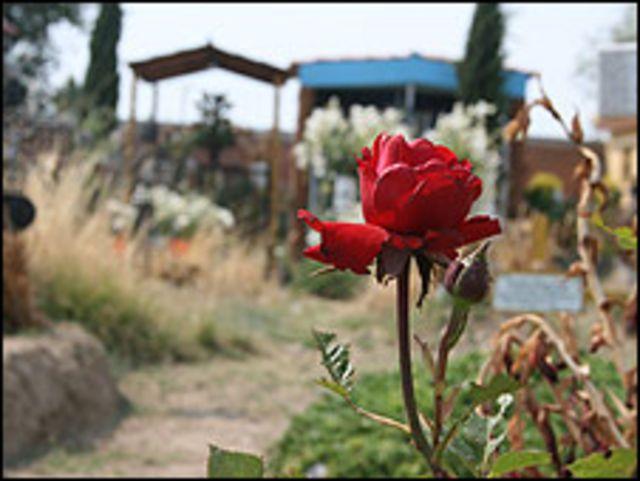 Lugar donde fue enterrada Blanca Esther Muñoz