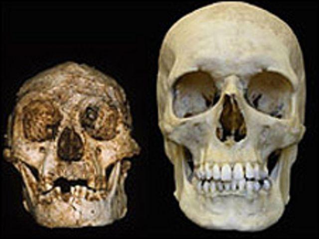 Calavera humana y calavera de Homo floresiensis (derecha)