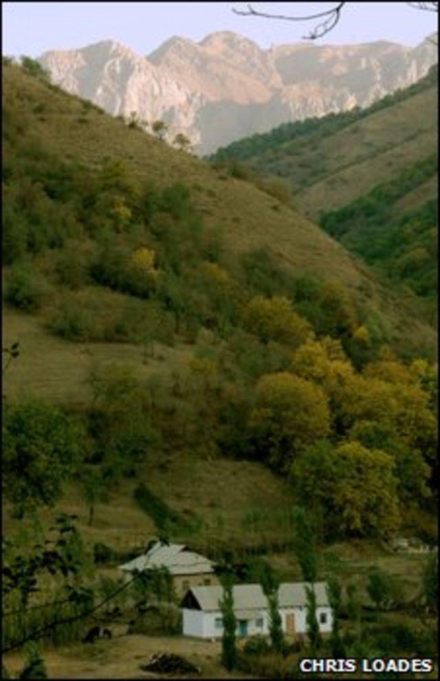 Bosque en Kirguistán