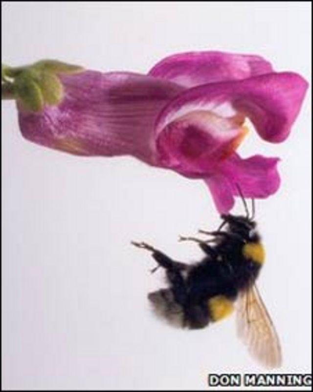 Abeja posándose en una flor