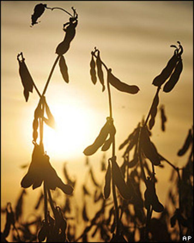 Cultivo de soja en Argentina