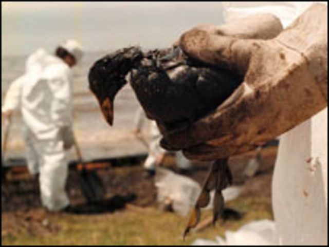 Derrame de petróleo en Magdalena, Argentina, en 1999 (Foto: Fundación Ala Plástica)
