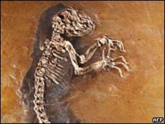 ископаемый лемур