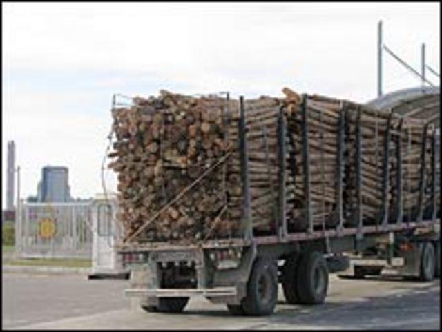Productores forestales uruguayos confían en que una nueva planta ampliará la demanda de madera