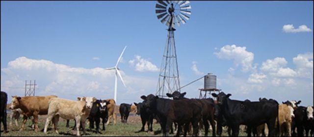 Turbinas eólicas y ganado
