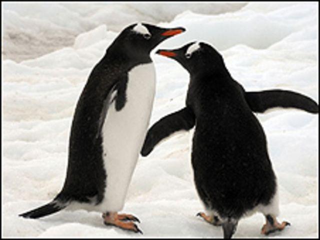 Pingüinos. Foto: 2006