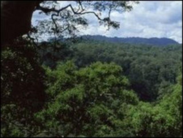 غابة مطرية