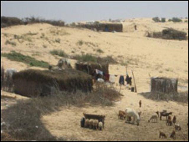 بدو سيناء