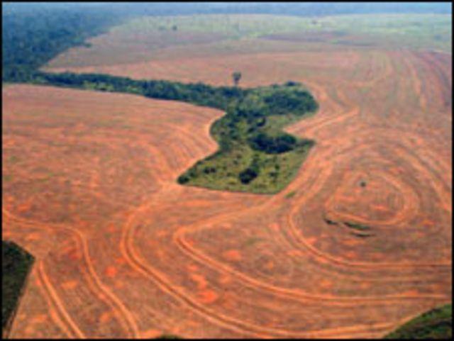 Área no Pará desmatada pelo cultivo de soja