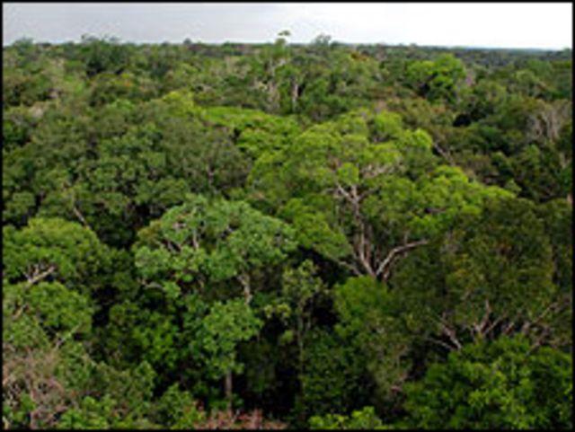 Área desmatada na Amazônia chega a 70 milhões de hectares