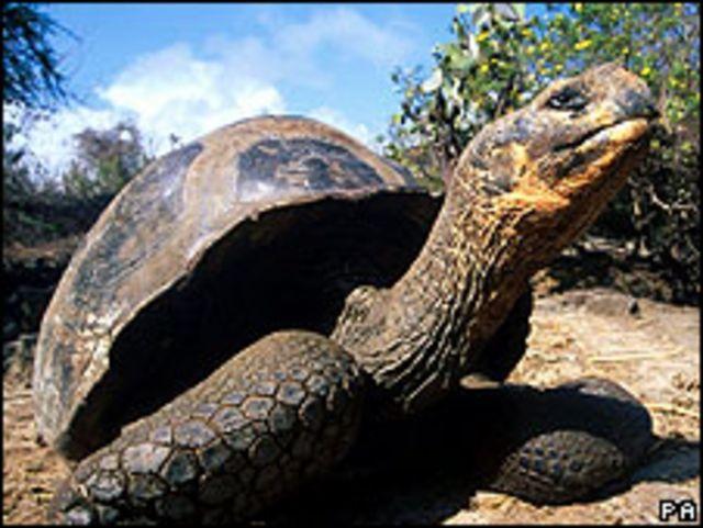 Черепаха на Галапагосі
