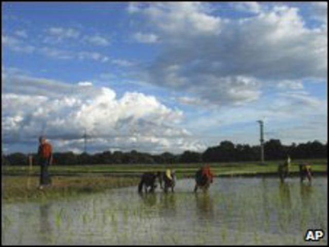 مزارعون هنود