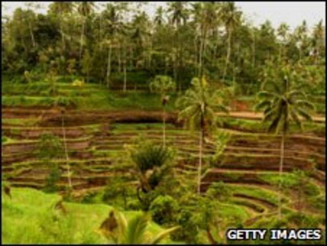 حقول الأرز ببالي الإندونيسية