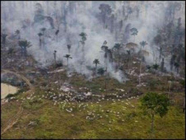 حريق في غابة بالامازون