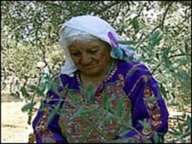 امرأة في حق زيتون