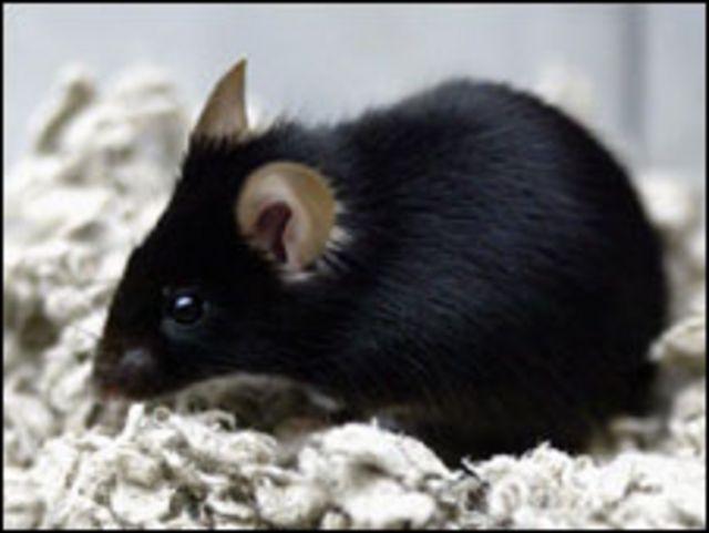 Первые мыши, не имеющие отца