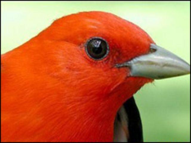 أحد الطيور