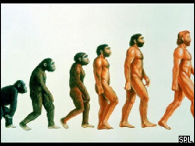 تطور الانسان