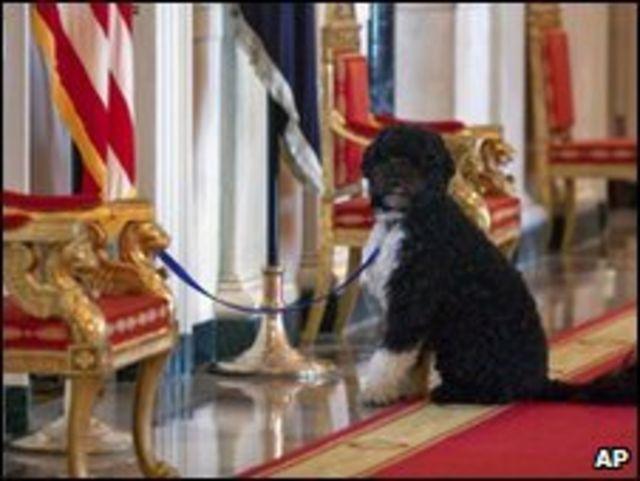 الكلب الذي أهداه السيناتور السابق، إدوارد كينيدي لأسرة أوباما